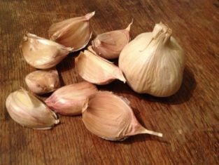 'Candy' garlic that I'm hoping to harvest in my own garden late next summer.