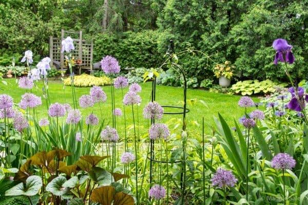 Where: Guelph, ON | When: June 2017 | What: Preparing the garden for the Brantford Garden Club Bus Tour! | Photo: Maggie S.