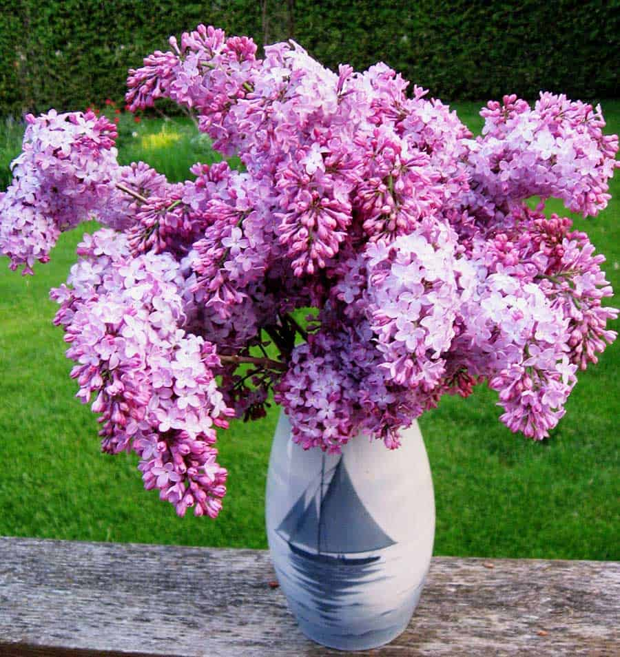 Lilacs in Bing and Grondahl vase