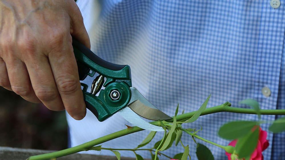 Dramm pruner photo by Garden Making