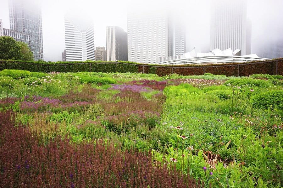 The Lurie Garden in Chicago (Photo by Adam Woodruff)