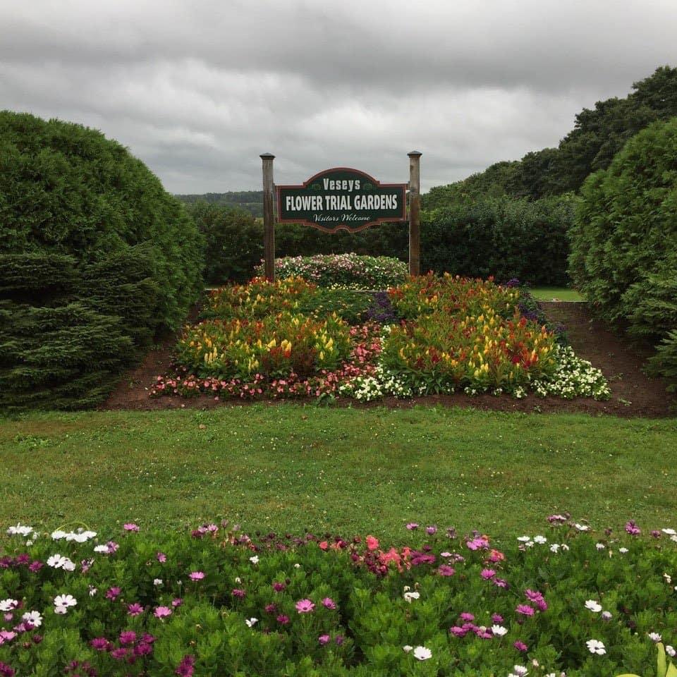 Veseys trial garden