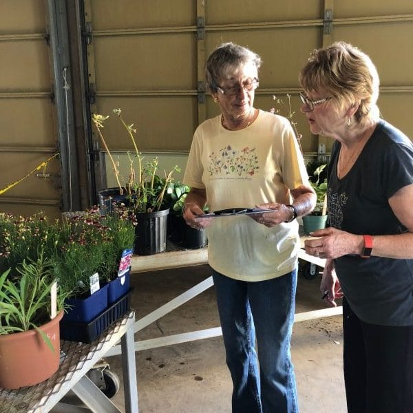 Preparing for the fall plant sale by Niagara Master Gardeners.