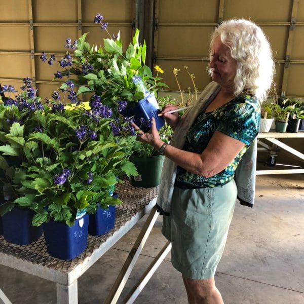Getting ready for the Niagara Master Gardens fall plant sale on Sept. 8.