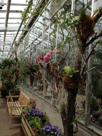 Organey is open on one side to the spring sunshine at Denver Botanic Garden..