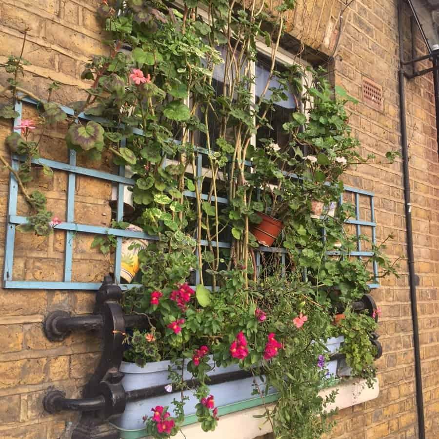 London flower box