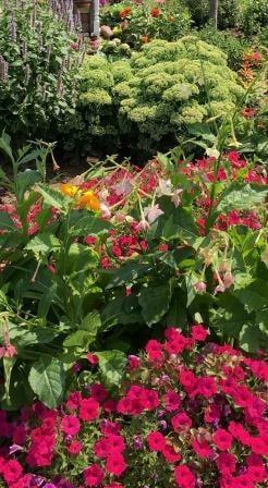Free speaker about Carveth Gardens