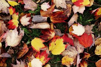 Gather fallen leaves to make leaf mould: your soil will thank you.