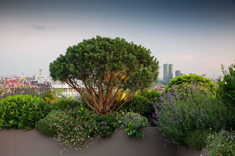 Emily Erlam | A Sense of Place: Designing Gardens With Impact