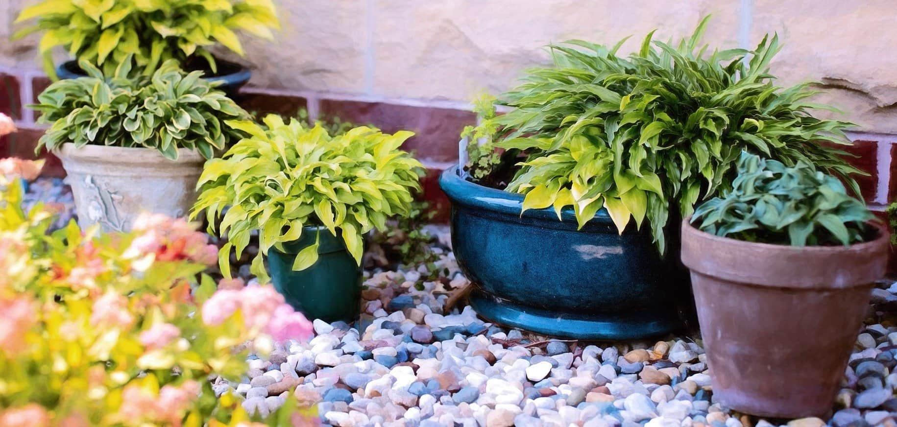 CHS Plant Auction & Sale
