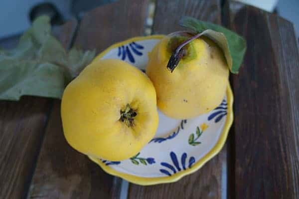Quince fruit (Photo by Carol Pope)
