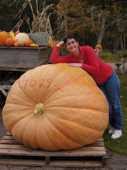 Alluring photo of an 'Atlantic Giant' pumpkin grown from seed (Photo from Veseys.com)