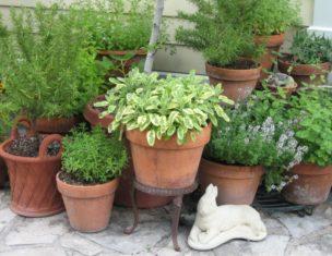 Herbs in pots (Garden Making photo)