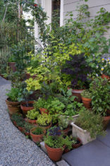 Carol Pope's compact but bountiful kitchen container garden. (All photos by Carol Pope)