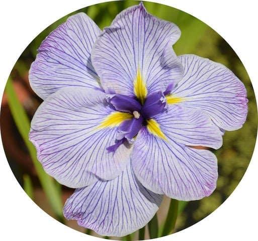 Floral designer Jennifer Harvey in Brockville