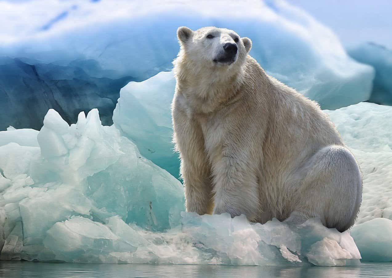 Connecting Polar Bears & Carrots