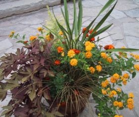 Sunny container combination (Garden Making photo)