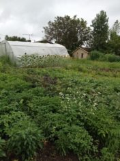 Linda uses hoop houses to extend the growing season, so those lucky enough to get a weekly basket of produce through her CSA program receive a diverse selection through the year.